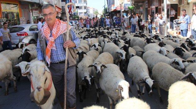 Çobanın bayramı Seferihisar'da kutlanacak