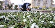 Karşıyaka'ya 200 bin kış çiçeği…